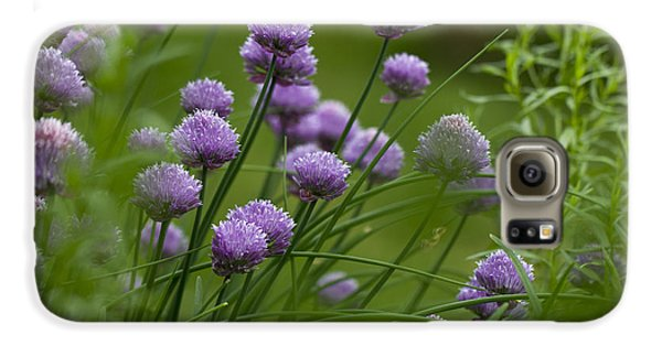 Herb Garden. Galaxy S6 Case