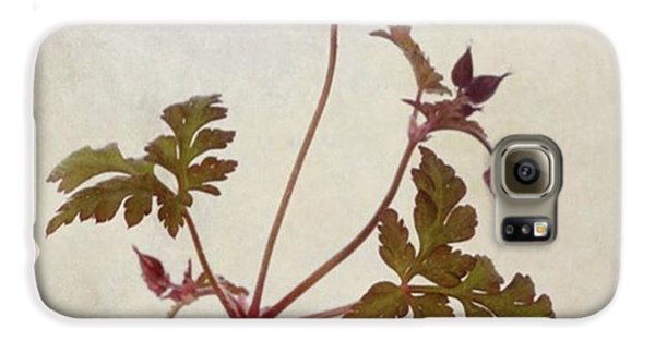 Summer Galaxy S6 Case - Herb Robert - Wild Geranium  #flower by John Edwards