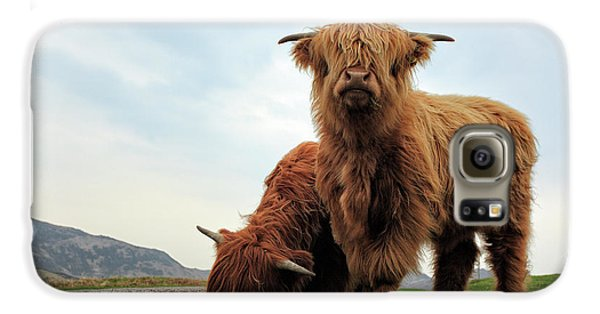 Bull Galaxy S6 Case - Highland Cow Calves by Grant Glendinning
