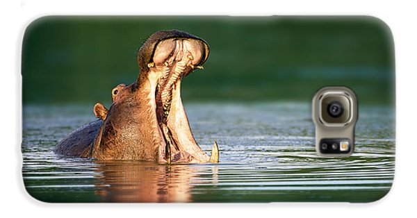 Hippopotamus Galaxy S6 Case by Johan Swanepoel