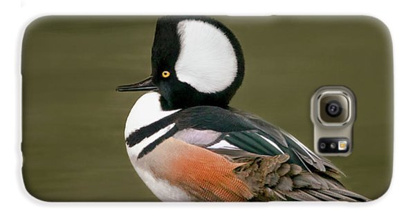 Hooded Merganser Galaxy S6 Case