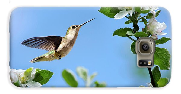 Hummingbird Springtime Galaxy S6 Case