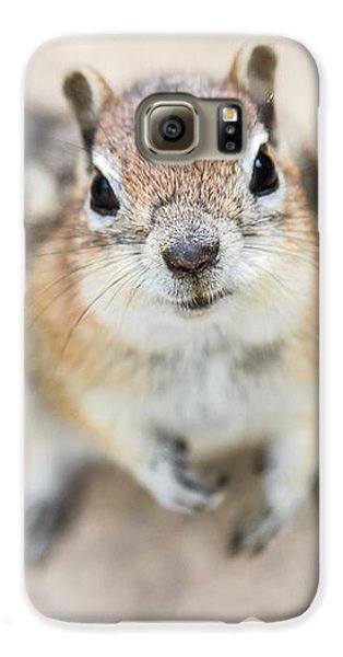 Hypno Squirrel Galaxy S6 Case