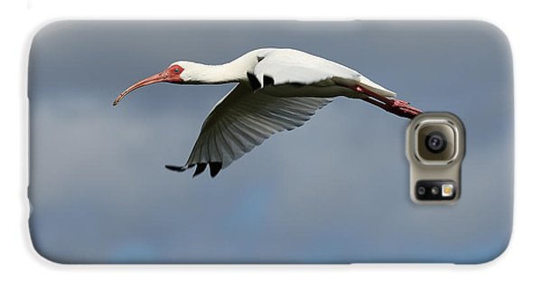 Ibis In Flight Galaxy S6 Case by Carol Groenen