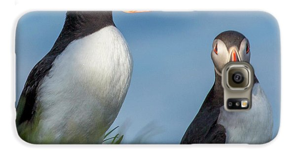 Puffin Galaxy S6 Case - Iceland Puffins  by Betsy Knapp