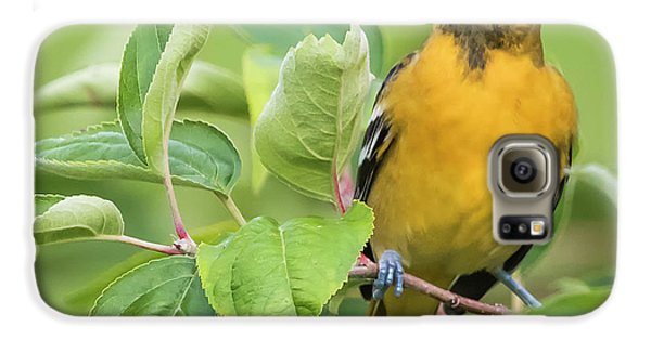 Immature Baltimore Oriole  Galaxy S6 Case