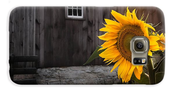 Sunflower Galaxy S6 Case - In The Light by Bill Wakeley