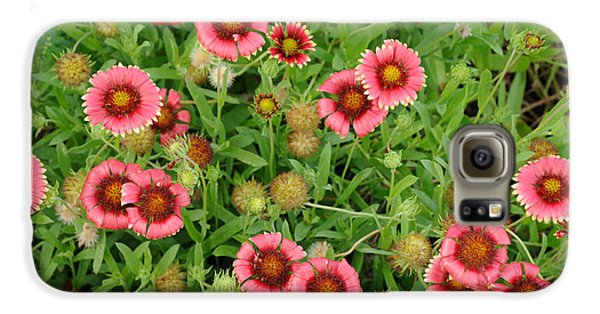 Indian Blanket Flowers Galaxy S6 Case