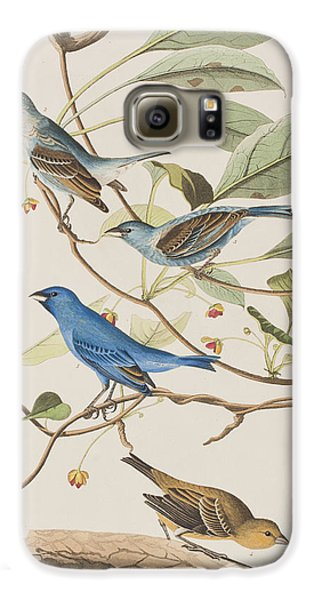 Indigo Bird Galaxy S6 Case by John James Audubon