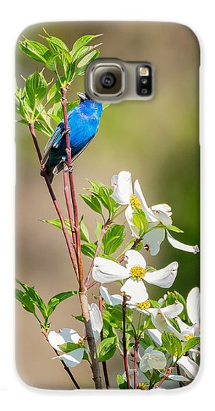 Indigo Bunting In Flowering Dogwood Galaxy S6 Case by Bill Wakeley