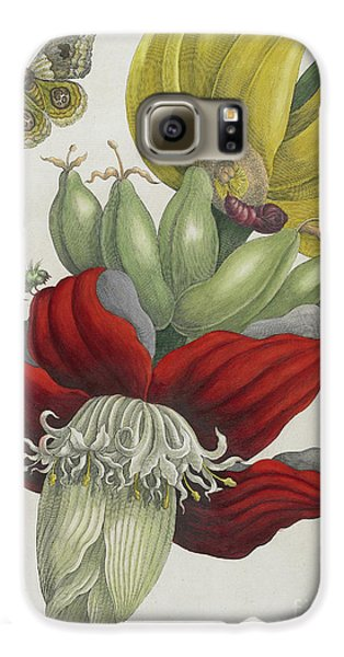 Inflorescence Of Banana, 1705 Galaxy S6 Case by Maria Sibylla Graff Merian