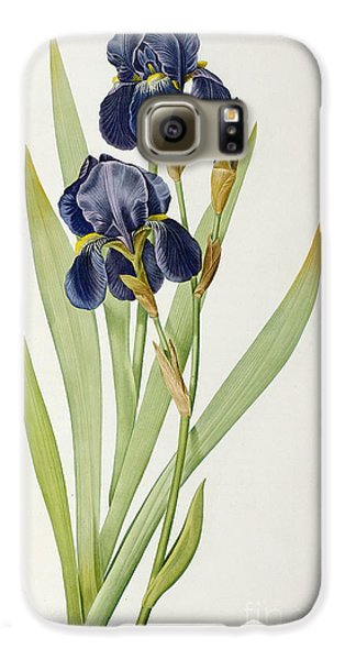 Iris Germanica Galaxy S6 Case by Pierre Joseph Redoute