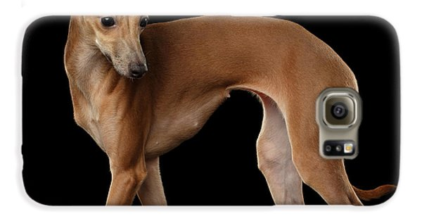 Italian Greyhound Dog Standing  Isolated Galaxy S6 Case by Sergey Taran