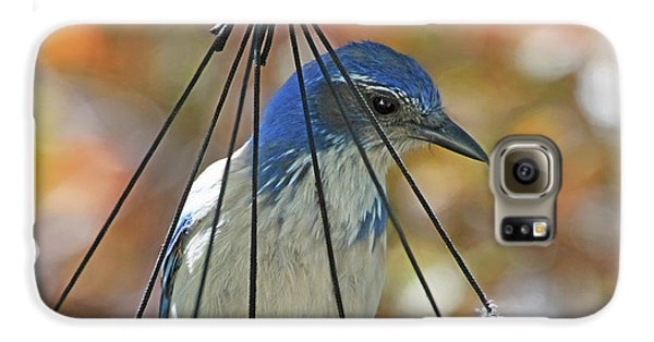 Bluejay Galaxy S6 Case - Jail Bird by Donna Kennedy