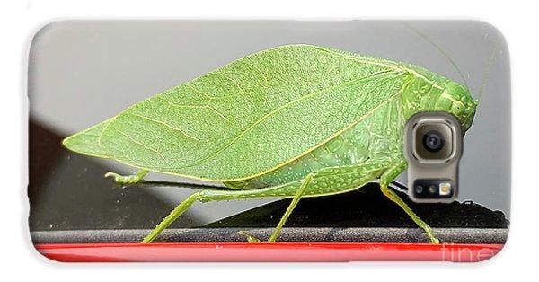 Katydids- Bush Crickets Galaxy S6 Case