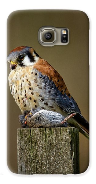 Kestrel With Prey Galaxy S6 Case