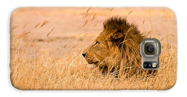 Animals Galaxy S6 Case - King Of The Pride by Adam Romanowicz