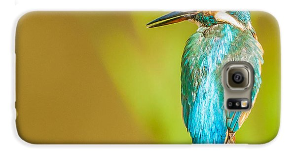 Kingfisher Galaxy S6 Case by Paul Neville