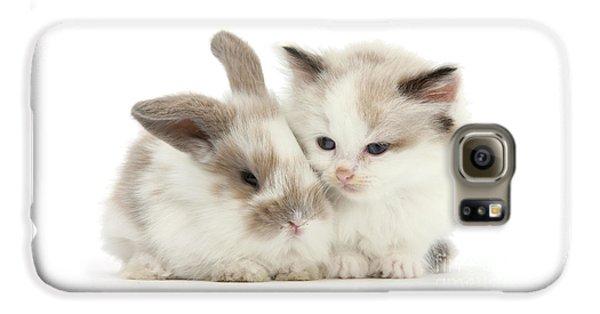 Kitten Cute Galaxy S6 Case