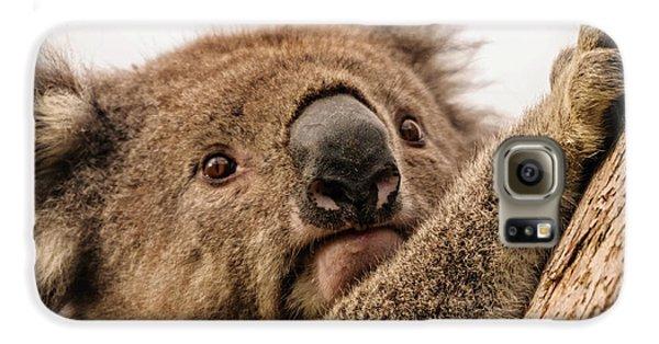 Koala 3 Galaxy S6 Case