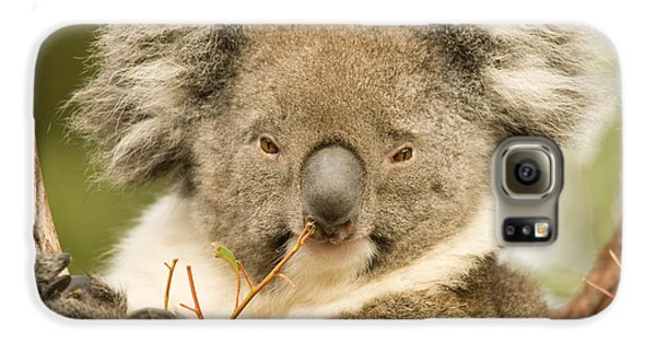 Koala Snack Galaxy S6 Case