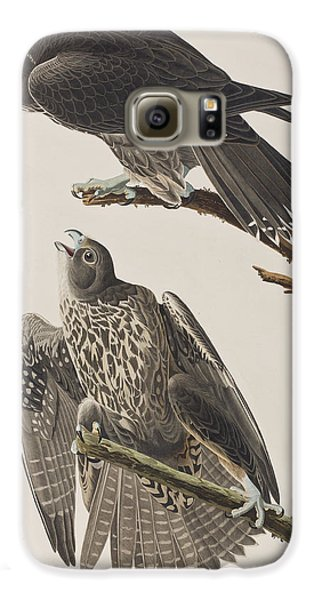 Labrador Falcon Galaxy S6 Case by John James Audubon