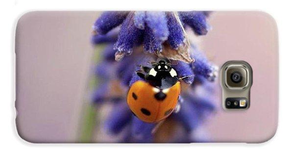 Galaxy S6 Case - Ladybird On Norfolk Lavender  #norfolk by John Edwards