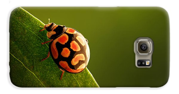 Ladybug  On Green Leaf Galaxy S6 Case by Johan Swanepoel