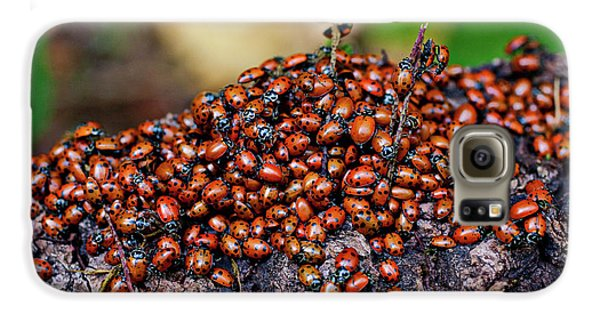 Ladybugs On Branch Galaxy S6 Case by Garry Gay
