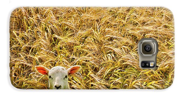 Lamb With Barley Galaxy S6 Case by Meirion Matthias