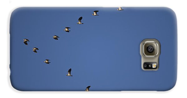 Lapwing Flock Galaxy S6 Case by Per-Olov Eriksson