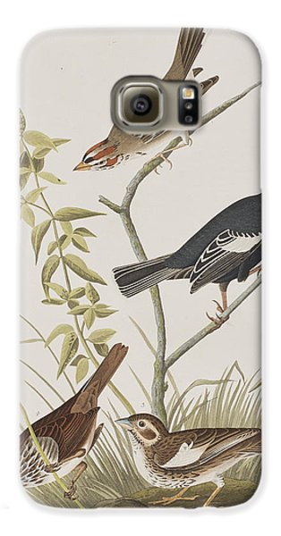 Lark Finch Prairie Finch Brown Song Sparrow Galaxy S6 Case by John James Audubon