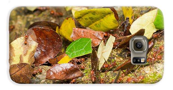 Leaf-cutter Ants Galaxy S6 Case by B.G. Thomson