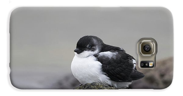 Least Auklet Galaxy S6 Case