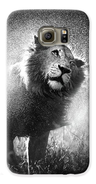 Cat Galaxy S6 Case - Lion Shaking Off Water by Johan Swanepoel