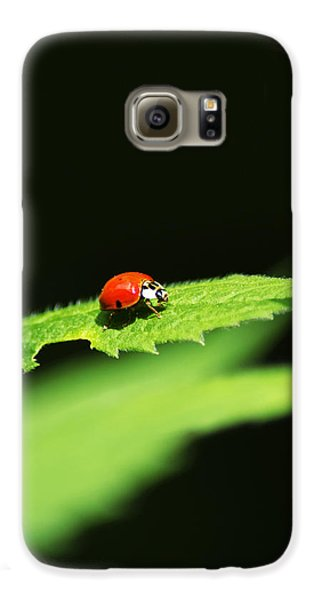 Little Red Ladybug On Green Leaf Galaxy S6 Case