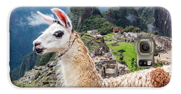 Llama At Machu Picchu Galaxy S6 Case by Jess Kraft