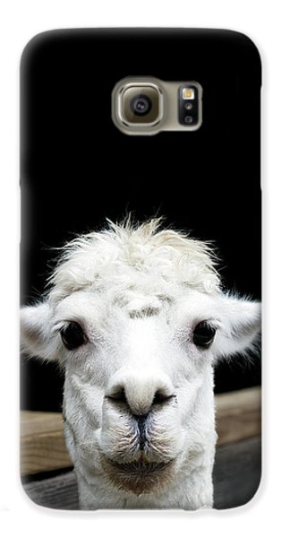 Llama Galaxy S6 Case by Lauren Mancke