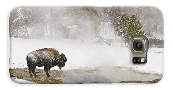 Galaxy S6 Case featuring the photograph Bison Keeping Warm by Gary Lengyel
