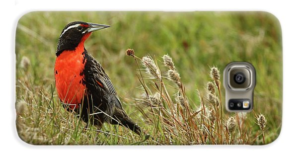 Long-tailed Meadowlark Galaxy S6 Case by Bruce J Robinson