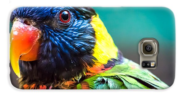 Lorikeet Glance Galaxy S6 Case
