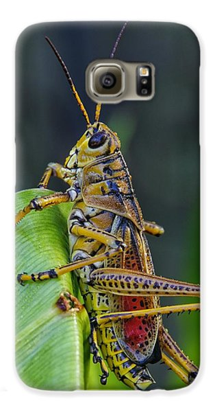 Lubber Grasshopper Galaxy S6 Case by Richard Rizzo