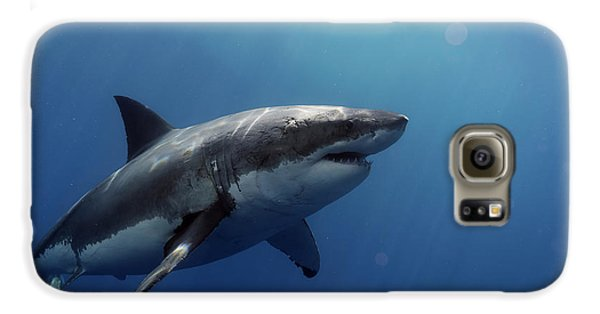 Lucy Posing At Isla Guadalupe Galaxy S6 Case by Shane Linke