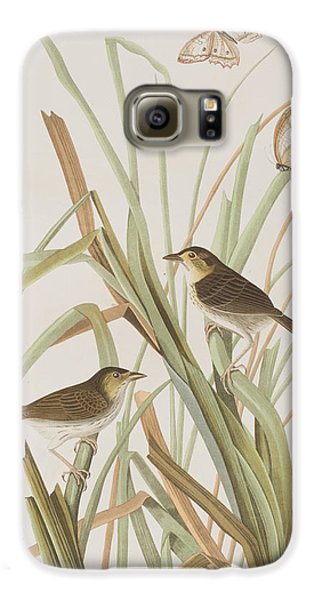 Macgillivray's Finch  Galaxy S6 Case by John James Audubon