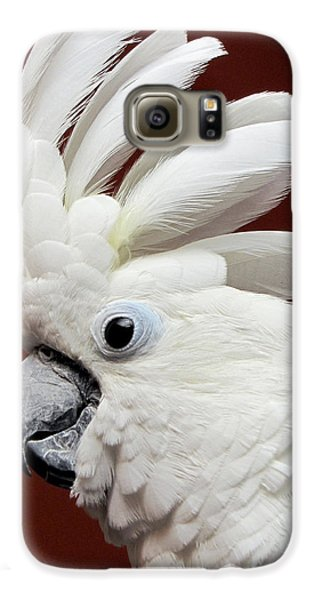 Maggie The Umbrella Cockatoo Galaxy S6 Case