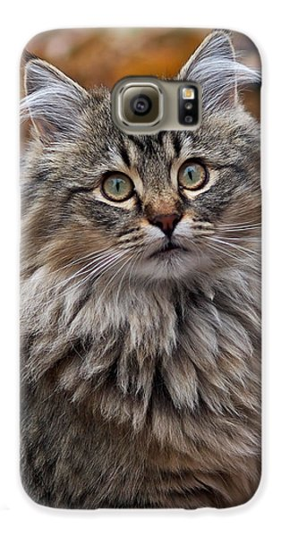 Maine Coon Cat Galaxy S6 Case