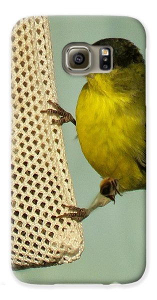 Male Goldfinch On Sock Feeder Galaxy S6 Case