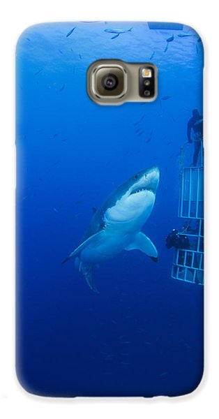 Male Great White With Cage, Guadalupe Galaxy S6 Case by Todd Winner
