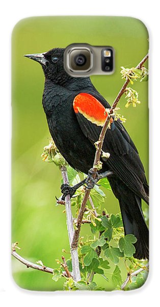 Male Red-winged Blackbird Galaxy S6 Case