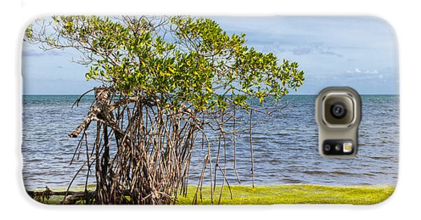 Mangrove Galaxy S6 Case - Mangrove At Florida Keys by Elena Elisseeva